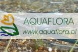 Aquamax ECO Premium 6000 - pompa wodna